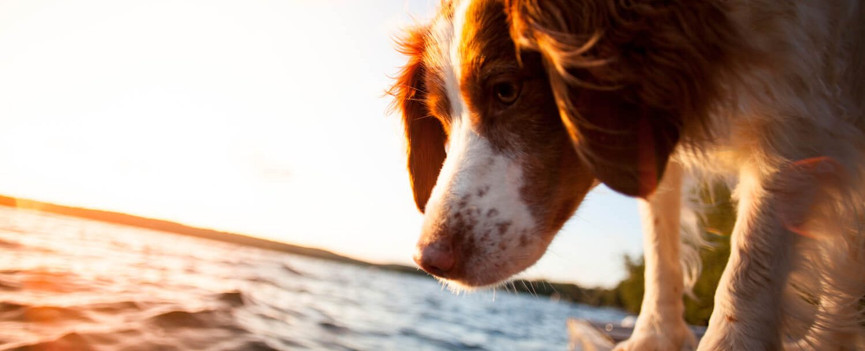 Dog on a dock