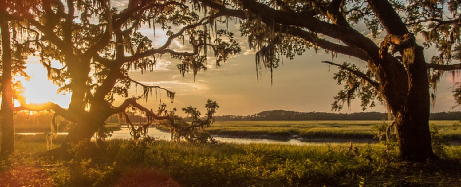 Discover Kiawah Island's unique ecosystem at Heron Park Nature Center!