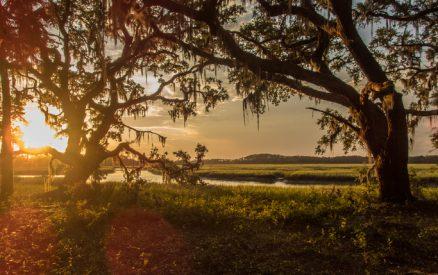 Discover Kiawah Island's unique ecosystem at Heron Park Nature Center!