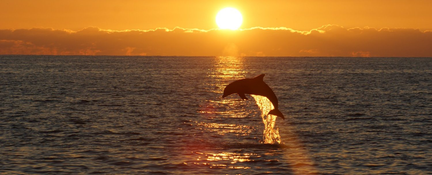 kiawah island dolphin watching at sunset